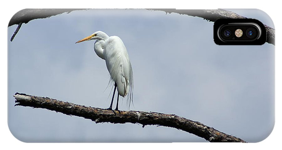 Bird IPhone X Case featuring the photograph Snowy Egret In Plume by Debbie May