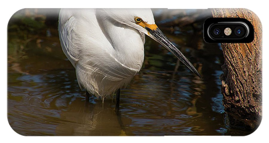 Snowy Egret IPhone X Case featuring the photograph Snowy Egret by Kelly Lemen