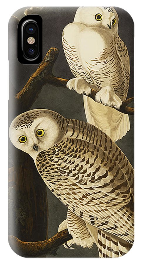 Snowy Owl (nyctea Scandiaca) Plate Cxxi From 'the Birds Of America' (aquatint & Engraving With Hand-colouring) By John James Audubon (1785-1851) IPhone X Case featuring the drawing Snowy Owl by John James Audubon