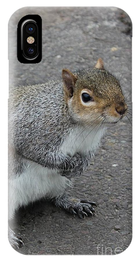 Squirrel IPhone X Case featuring the photograph So.... Got Nuts? by Vicki Spindler