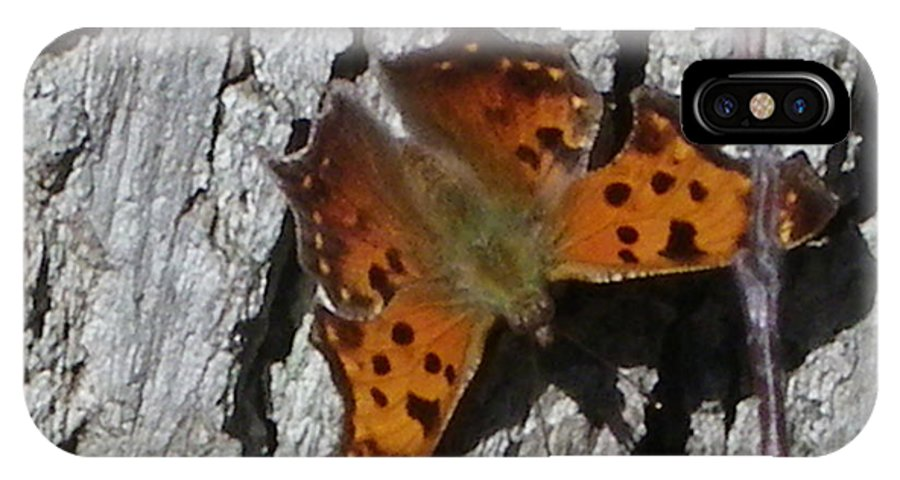 Moth IPhone X Case featuring the photograph Soakin Up The Autumn Sun by Peggy King