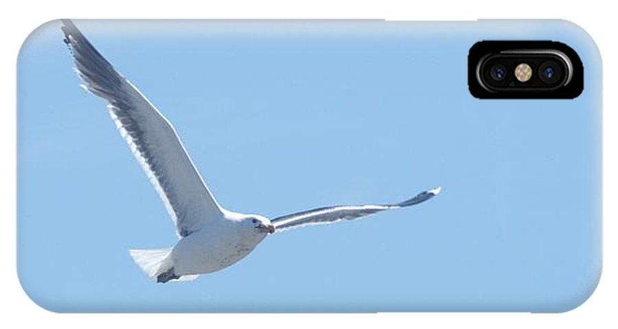 Seagull IPhone X Case featuring the photograph Soaring by Steven Natanson