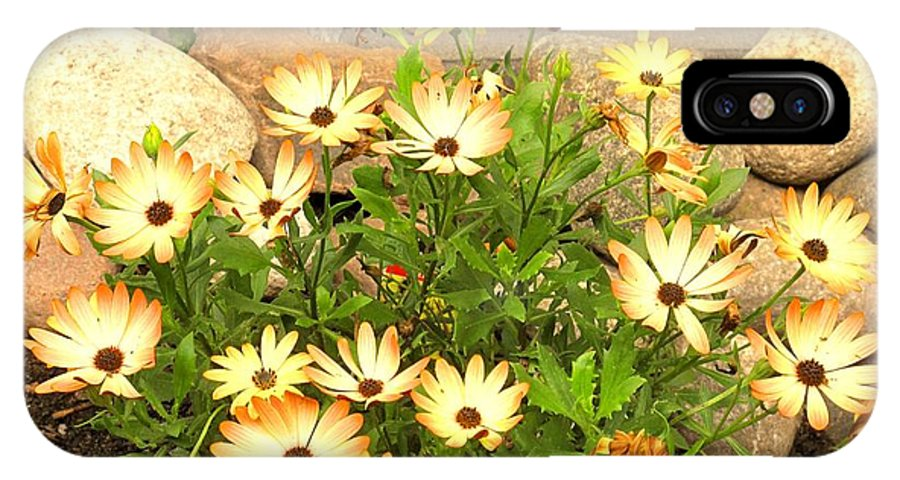Flowers IPhone X Case featuring the photograph Soft by Ian MacDonald