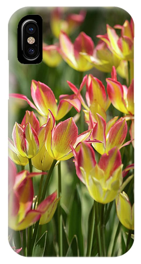 Tulips IPhone X Case featuring the photograph Soft Radiance by Deborah Jackson
