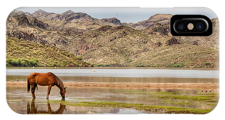 Animals IPhone X / XS Case featuring the photograph Solitary by Sandy Klewicki