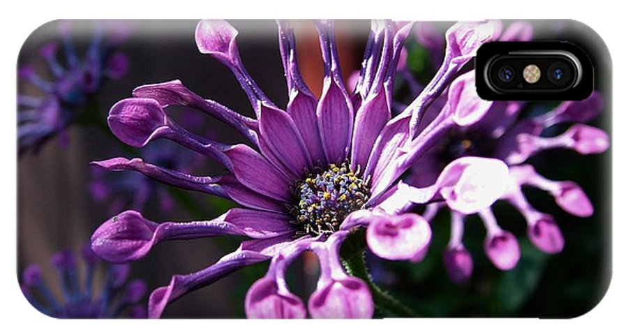 South African Daisy IPhone X Case featuring the photograph South African Daisy by Tracey Vivar