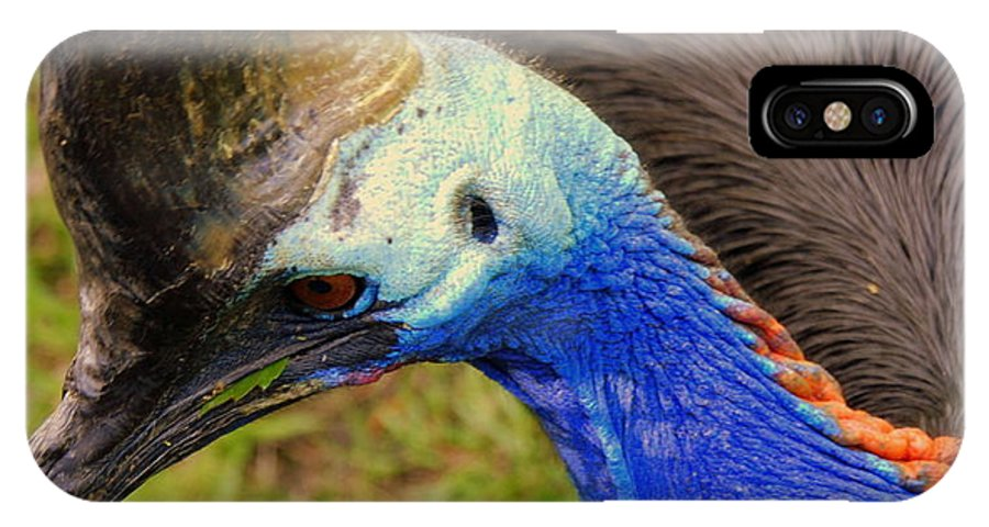 Southern Cassowary IPhone X Case featuring the photograph Southern Cassowary by Susanne Van Hulst