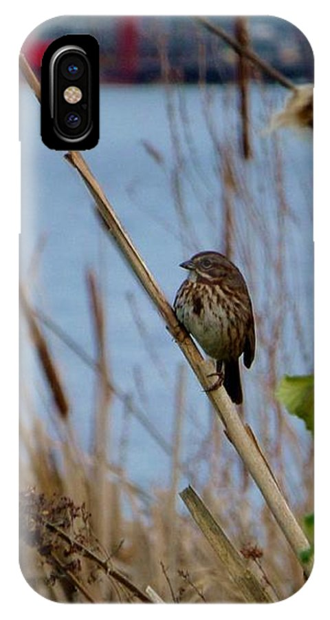 Sparrow IPhone X Case featuring the photograph Sparrow On The Cattails by As the Dinosaur Flies Photography