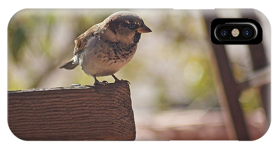 Sparrow IPhone X Case featuring the photograph Sparrow. by Robert Rodda