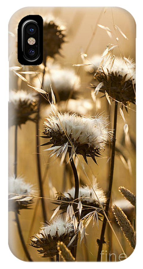 Flowers IPhone X Case featuring the photograph Spent Flowers In The Field by Sharon Foelz
