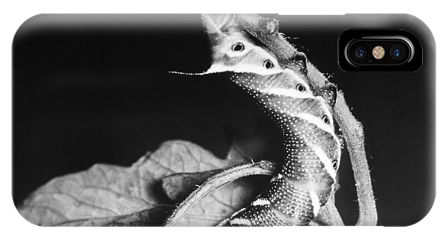 20th Century IPhone X Case featuring the photograph Sphinx Moth by Granger