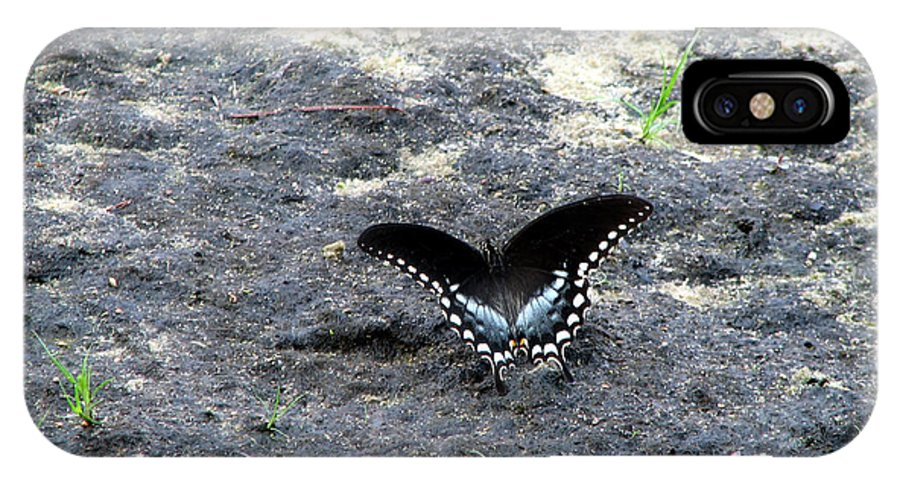 Spicebush IPhone X Case featuring the photograph Spicebush Swallowtail 2 by George Jones