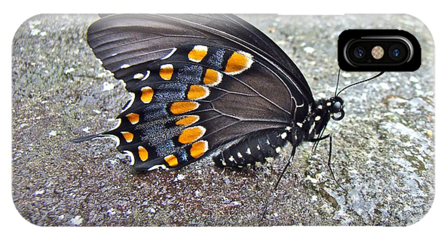 Butterfly IPhone X Case featuring the photograph Spicebush Swallowtail Butterfly Female - Papilio Troilus Troilus by Mother Nature