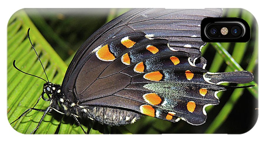 Insect IPhone X / XS Case featuring the photograph Spicebush Swallowtail Butterfly by Lindy Pollard