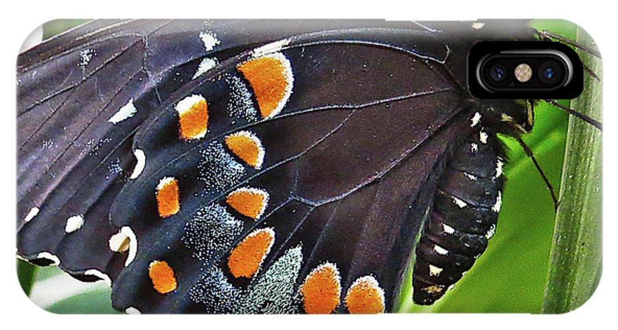 Insect IPhone X / XS Case featuring the photograph Spicebush Swallowtail by Lindy Pollard