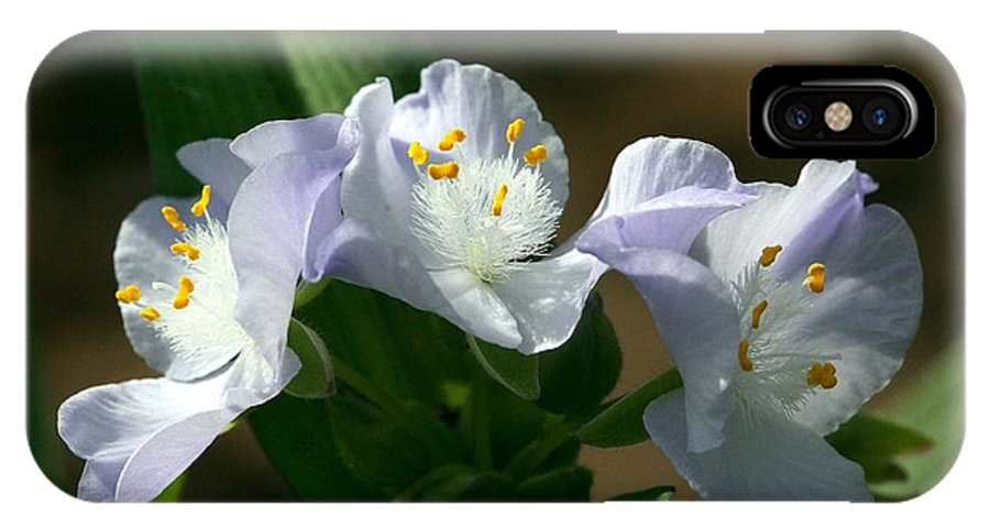 Spiderwort IPhone X Case featuring the photograph Spiderworts at Sunrise by Michael Dougherty