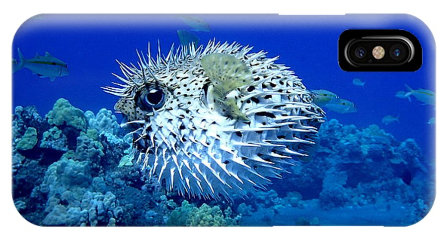 Fish IPhone X / XS Case featuring the photograph Spiky Exterior by Jackson Kowalski