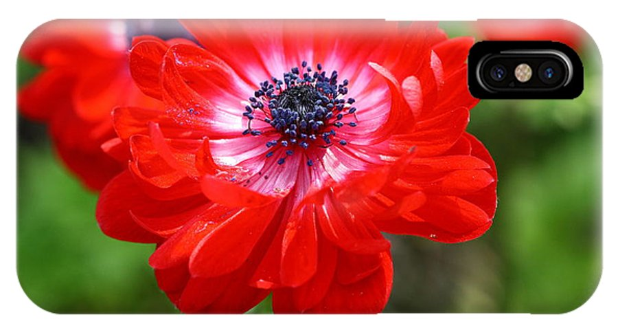 Flower IPhone X Case featuring the photograph Splash Of Color by Paul Slebodnick