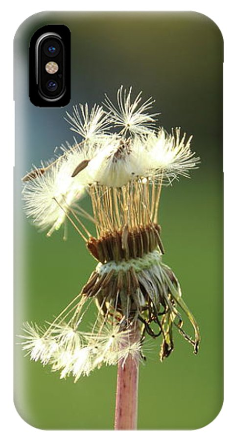 Dandelion IPhone X Case featuring the photograph Split Wishes by Stacey Scott