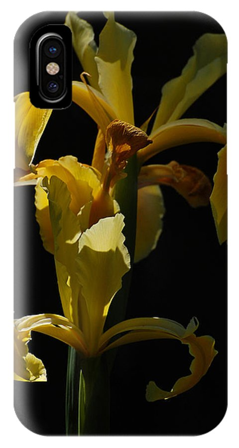 Iris IPhone X Case featuring the photograph Spotlight On Yellow by Jean Booth