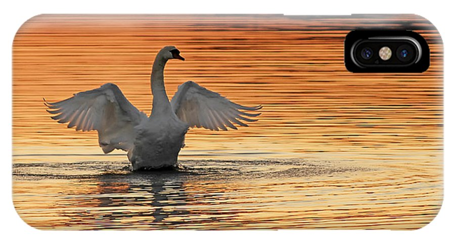 Swans At Dawn IPhone X Case featuring the photograph Spreading Her Wings In Gold by Randall Branham