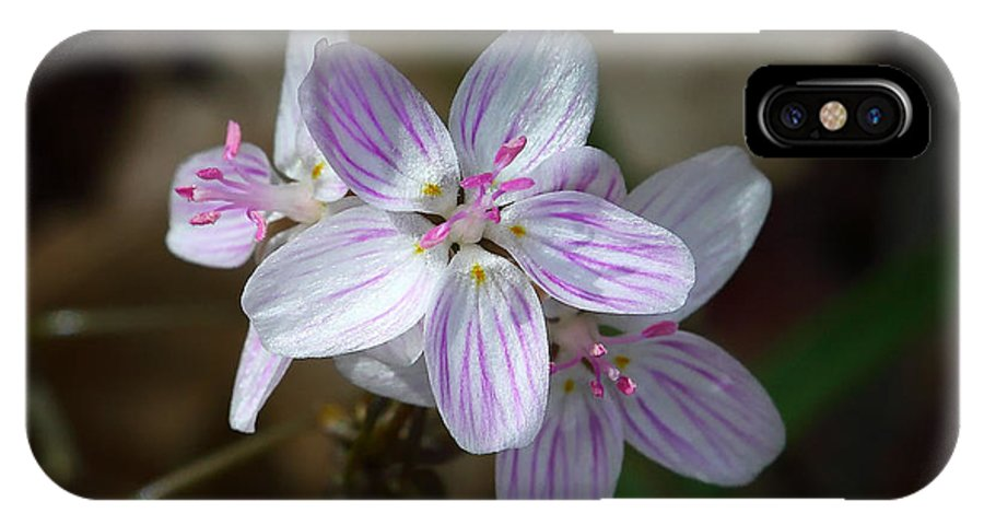 Spring Beauty IPhone X Case featuring the photograph Spring Beauty Macro by Michael Dougherty