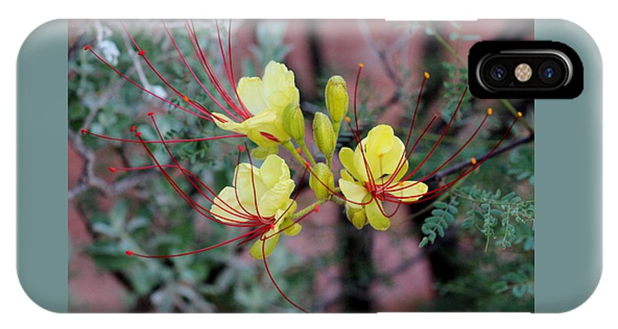 Flora IPhone X Case featuring the photograph Spring Blooms Yellow Red 052814a by Edward Dobosh