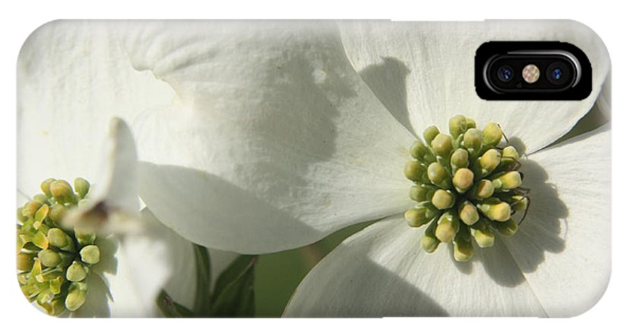 Dogwood IPhone X Case featuring the photograph Spring Blossoms by Diane Merkle