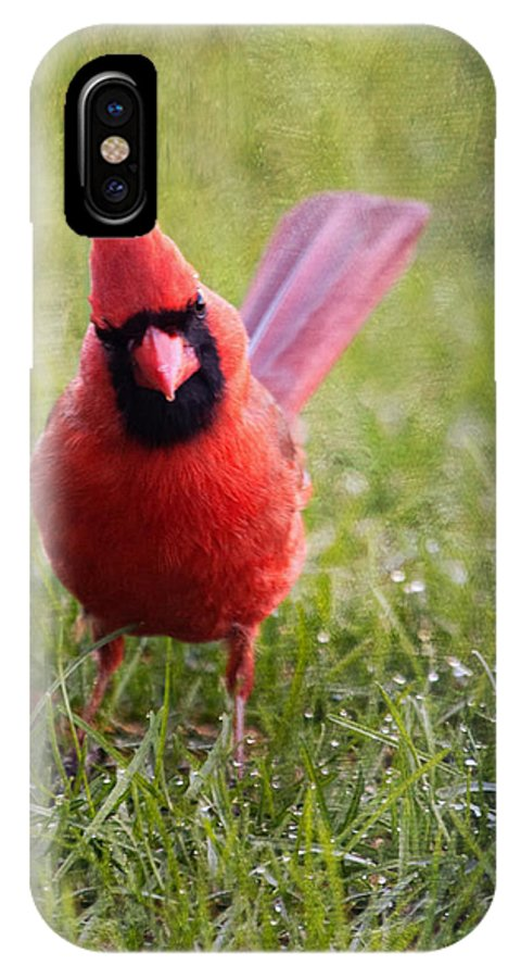Cardinal IPhone X Case featuring the photograph Spring Cardinal by Al Mueller