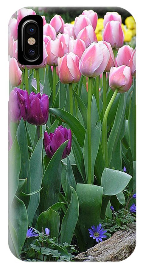 Tulips IPhone X Case featuring the photograph Spring Colors by Louise Magno