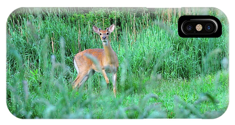 Deer IPhone X Case featuring the photograph Spring Deer by David Arment