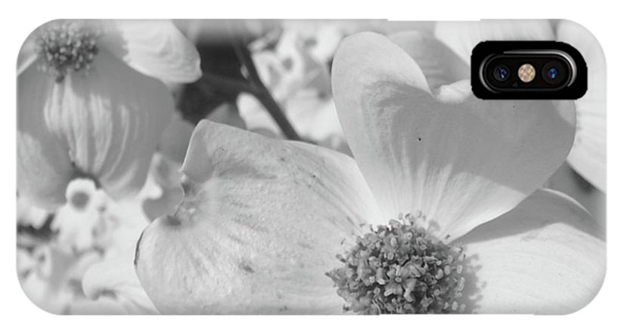 Dogwood IPhone X Case featuring the photograph Spring Has Sprung by WaLdEmAr BoRrErO