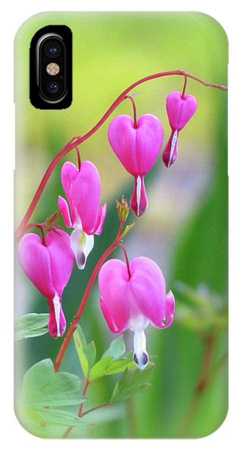 Bleeding Heart IPhone X / XS Case featuring the photograph Spring Hearts - Flowers With Vignette 2 by MTBobbins Photography