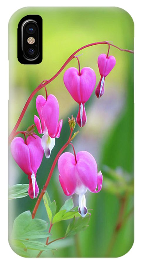 Bleeding Heart IPhone X / XS Case featuring the photograph Spring Hearts - Flowers With Vignette by MTBobbins Photography