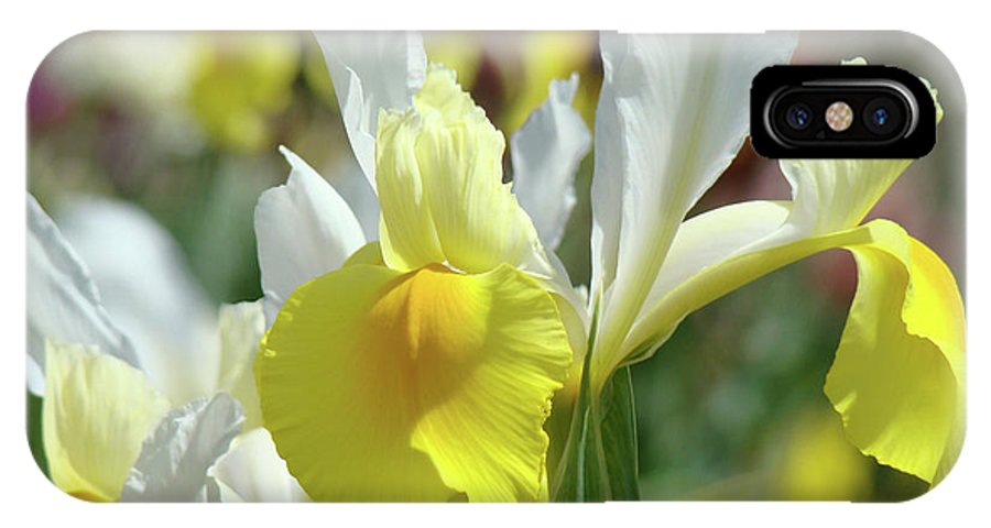 Iris IPhone X Case featuring the photograph Spring Irises Flowers Art Prints Canvas Yellow White Iris Flowers by Baslee Troutman