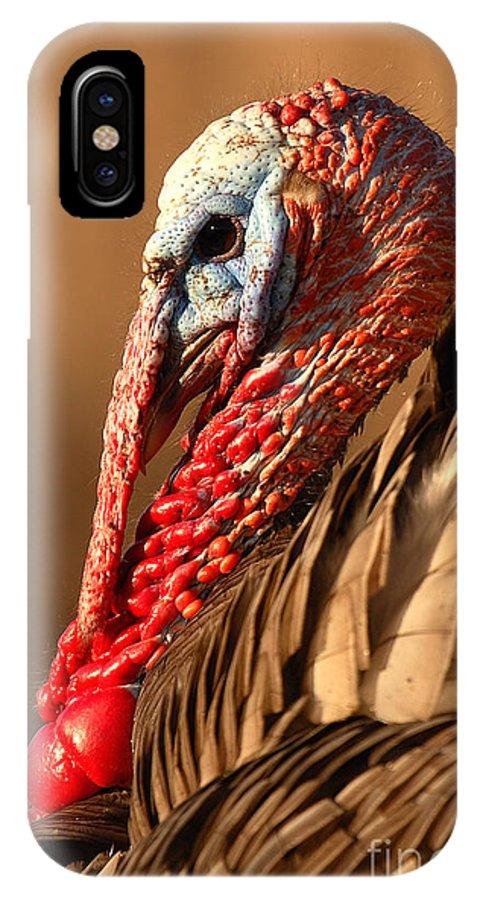 Turkey IPhone X Case featuring the photograph Spring Portrait Of Wild Turkey Tom by Max Allen