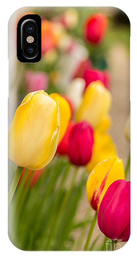 Flowers IPhone X Case featuring the photograph Spring Tulips by Beverly Tabet