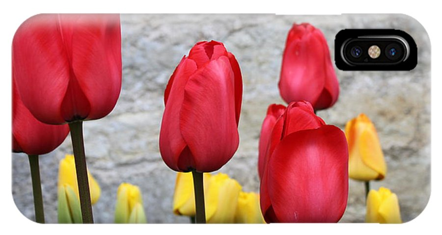 Tulips IPhone X Case featuring the photograph Spring Tulips by Lauri Novak