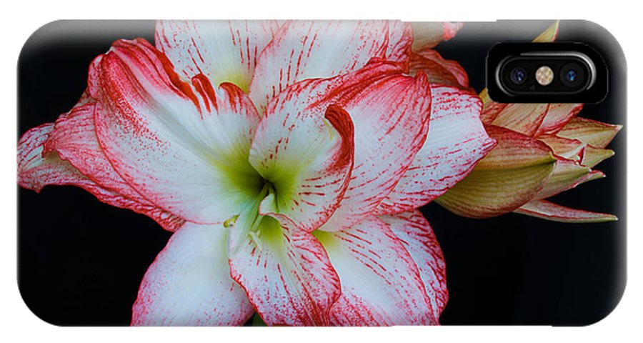 Amaryllis; Flower; Bloom; Blossom; Springtime; Spring; March; Stem. Bulb; Plant; Wildflower; Black; IPhone X Case featuring the photograph Springtime Florida Amaryllis by Allan Hughes