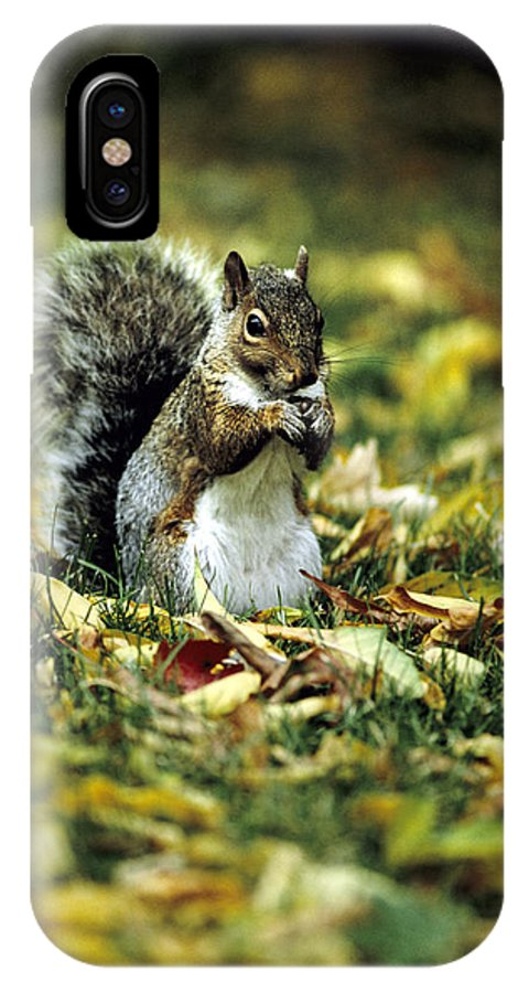 Squirrel IPhone Case featuring the photograph Squirrel In Leaves by Steve Somerville