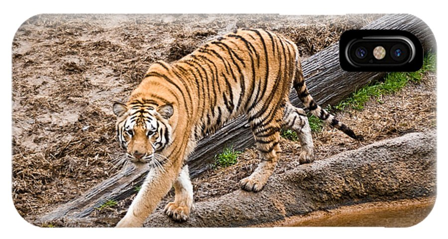 Tiger IPhone Case featuring the photograph Stalking Tiger - Bengal by Douglas Barnett