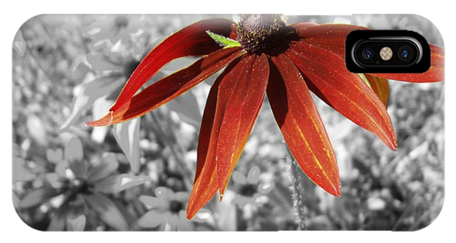 Black Eyed Susan IPhone X Case featuring the photograph Stand Out by Cathy Beharriell