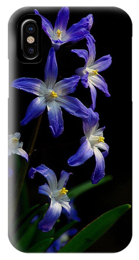 Star Flower IPhone X Case featuring the photograph Star Flower by Gordon Longmead