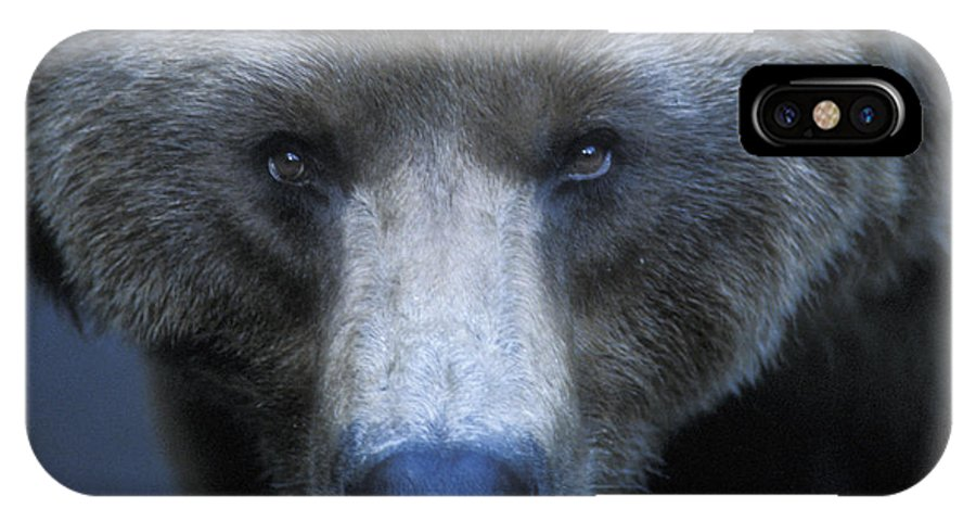 Yellowstone IPhone X Case featuring the photograph Stare Down by Sandra Bronstein