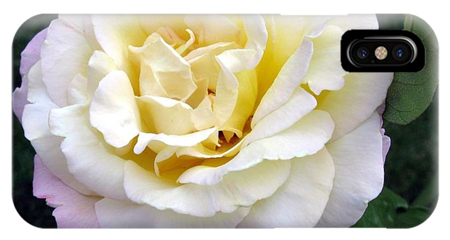 Rose IPhone X Case featuring the photograph Starting To Blush by Carol Sweetwood