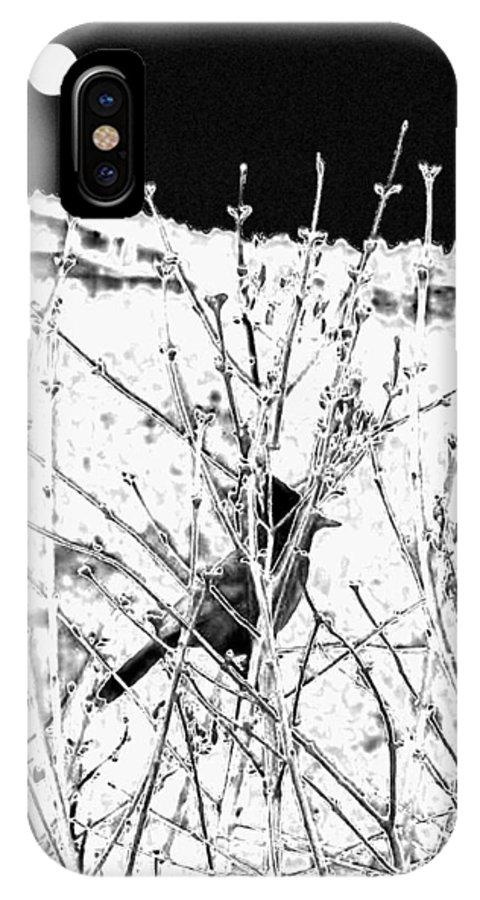 Stellar Jay IPhone X Case featuring the digital art Stellar Jay  by Will Borden