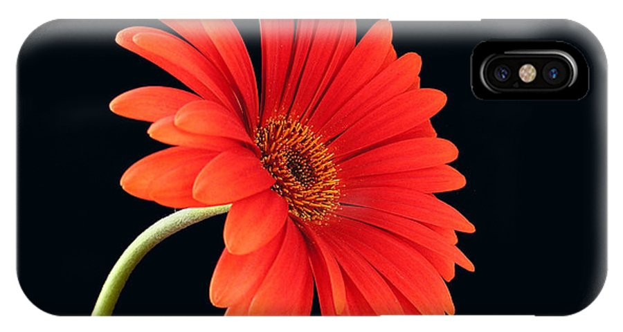 Flower IPhone Case featuring the photograph Stemming Beauty by Carol Milisen
