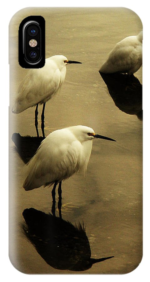 Egrets IPhone X Case featuring the photograph Still by Daniele Smith