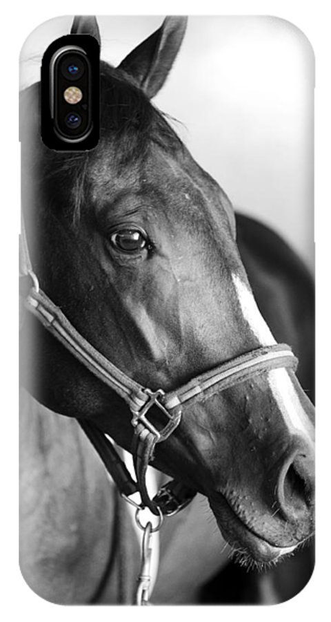 Horse IPhone X Case featuring the photograph Horse And Stillness by Marilyn Hunt