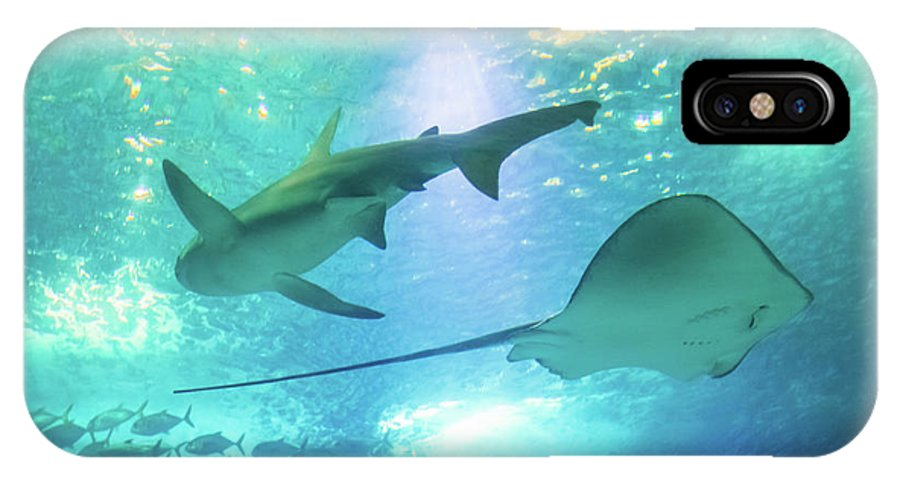 Underwater IPhone X Case featuring the photograph Sting Ray And Shark by Benny Marty